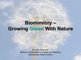 Biomimicry – Growing Green With Nature
