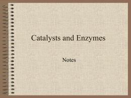 Catalysts and Enzymes