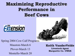 Body Condition, Nutrition and Reproduction of Beef Cows