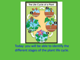 Life Cycle of a plant and Conifer