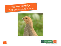 NGOET Grey Partridge Presentation