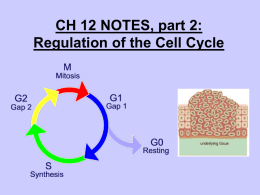Notes: Regulation of the Cell Cycle
